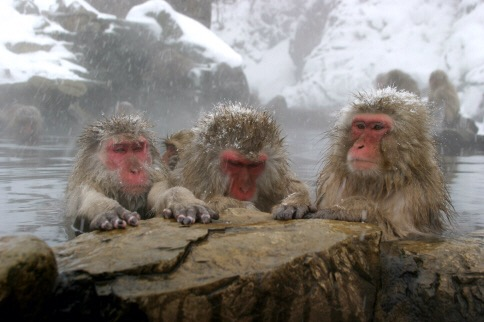 onsen snow monkeys